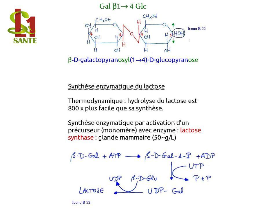 Synthèse enzymatique du lactose