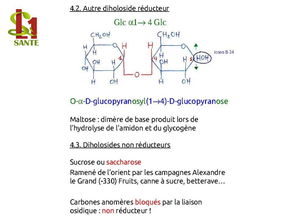 4 .2. Autre diholoside réducteur