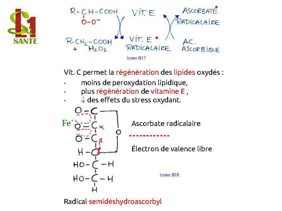Vit. C permet la régénération des lipides oxydés :