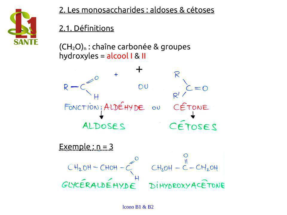 2. Les monosaccharides : aldoses & cétoses
