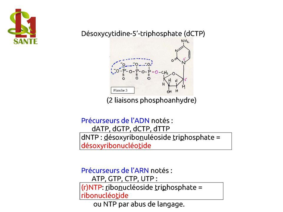 Désoxycytidine-5'-triphosphate (dCTP)