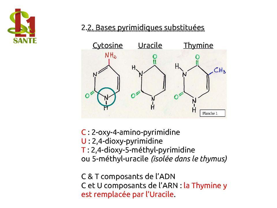 2.2. Bases pyrimidiques substituées