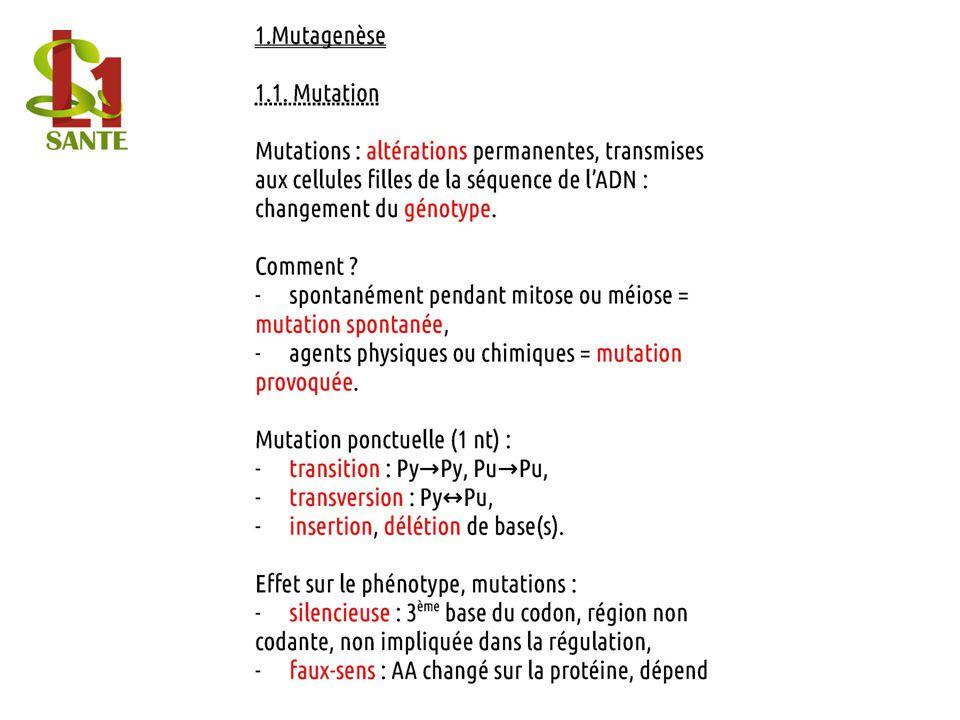 1.Mutagenèse