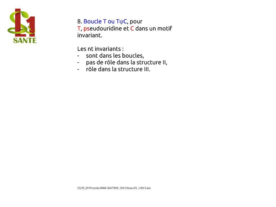 Boucle T ou TψC