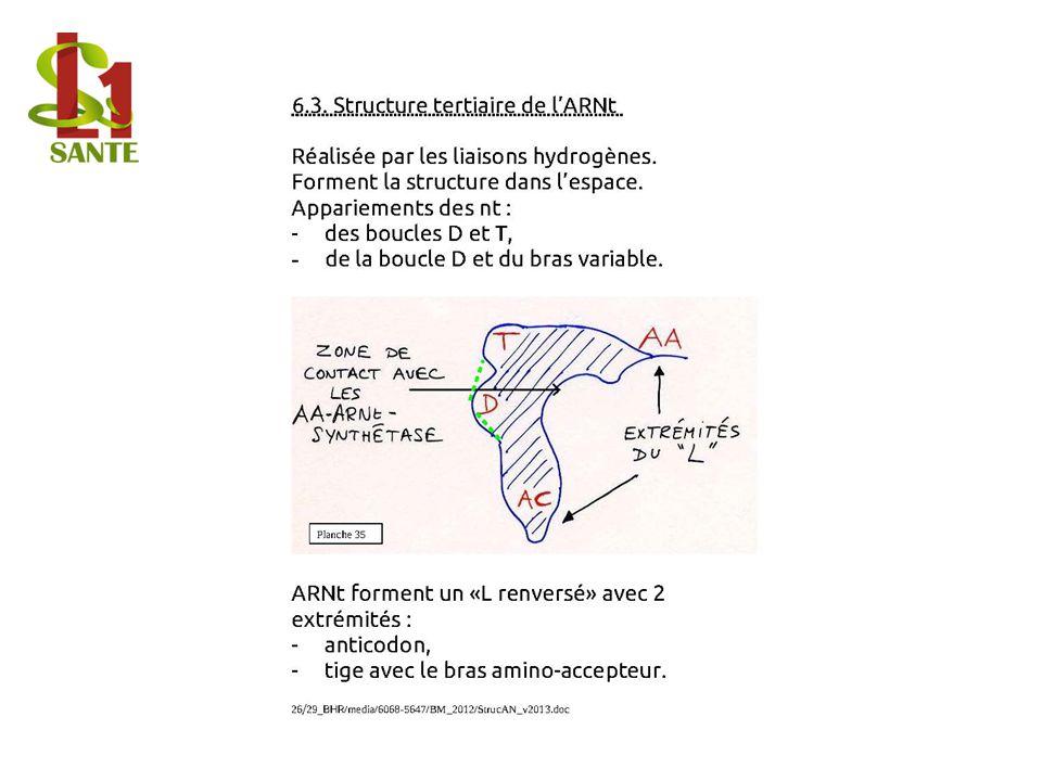 6.3. Structure tertiaire de l'ARNt