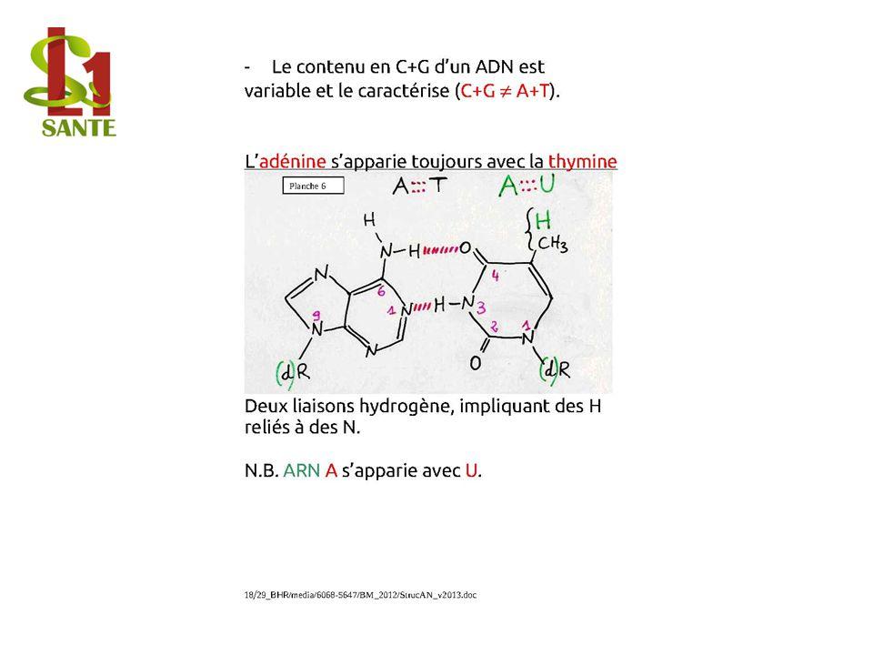 Le contenu en C+G d'un ADN est variable et le caractérise (C+G ¹ A+T).