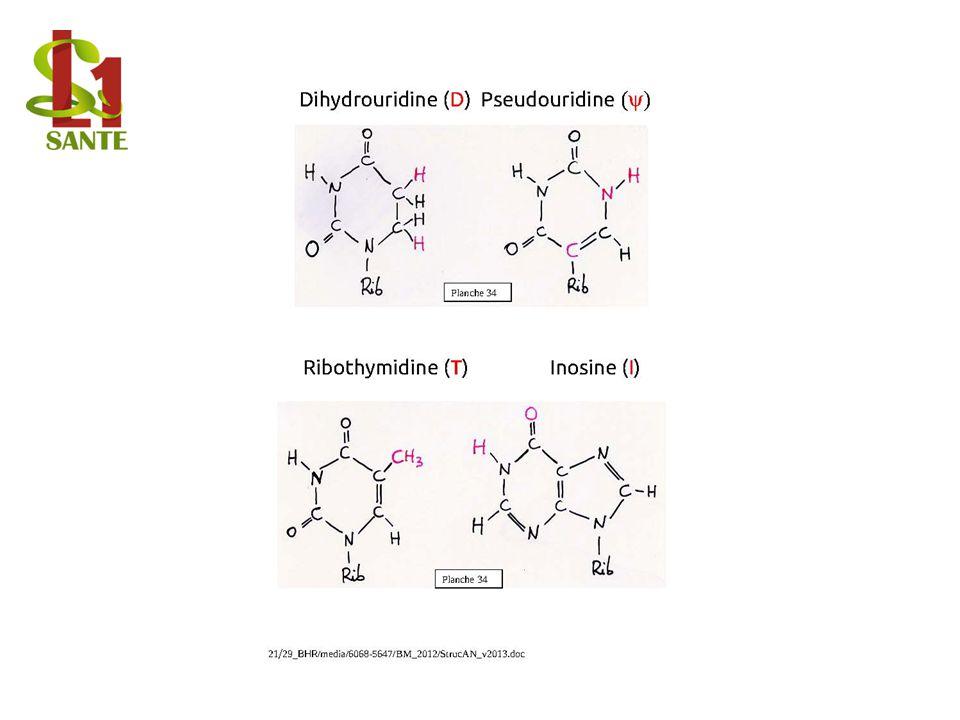Dihydrouridine, Pseudouridine, Ribothymidine, Inosine