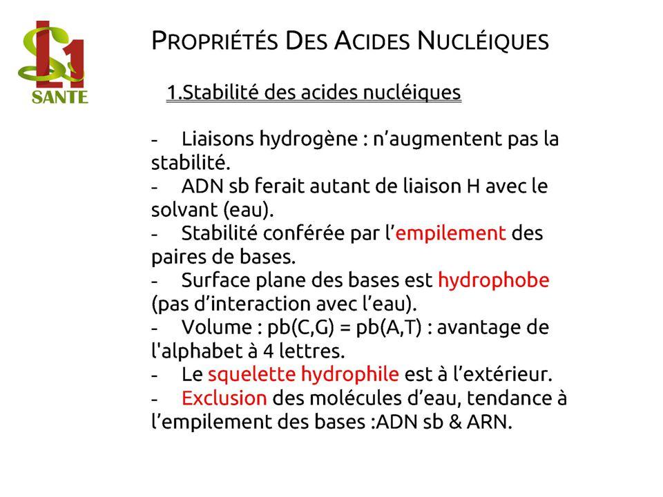1.Stabilité des acides nucléiques