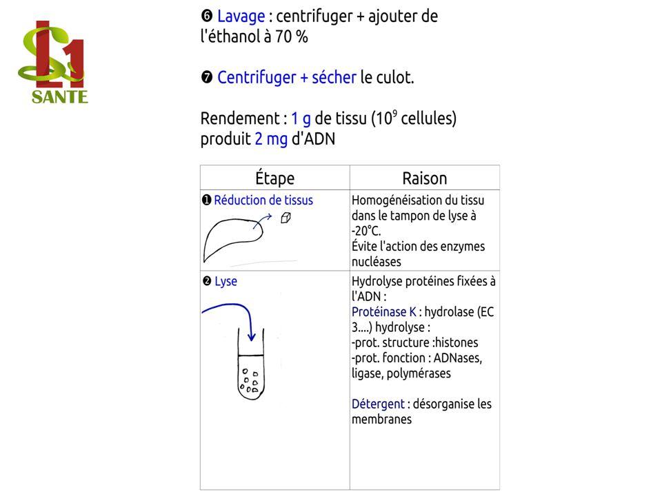 Lavage / Centrifuger + sécher