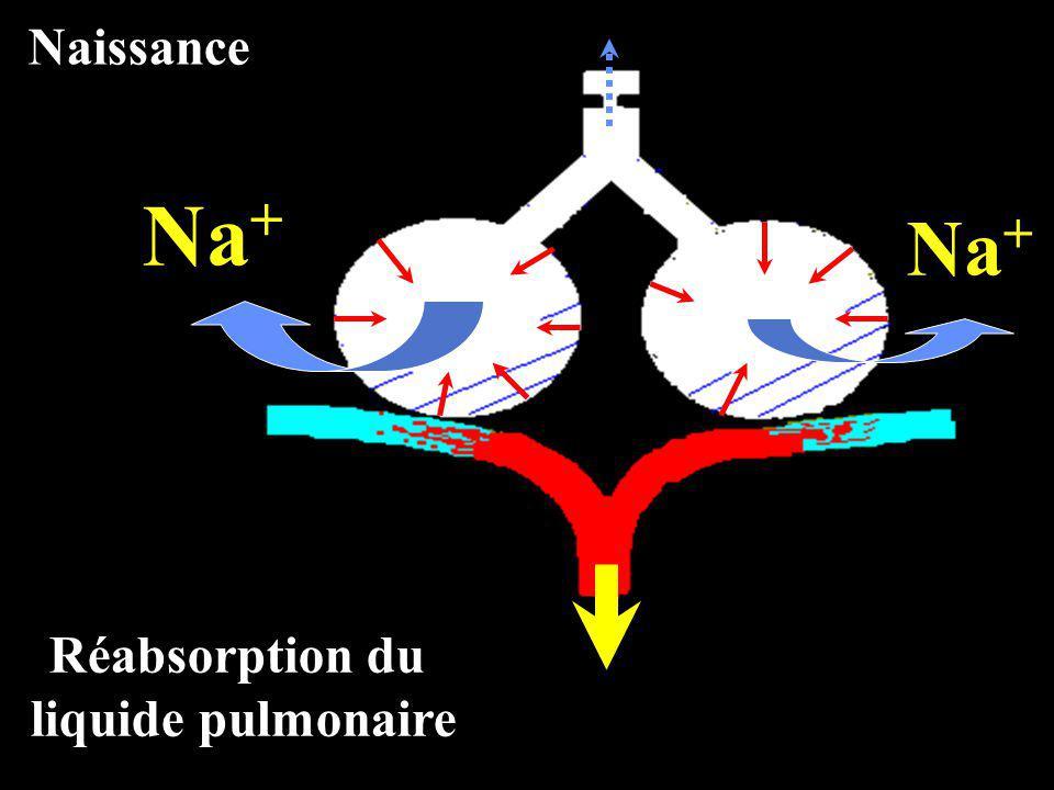 Naissance Na+ Na+ Réabsorption du liquide pulmonaire