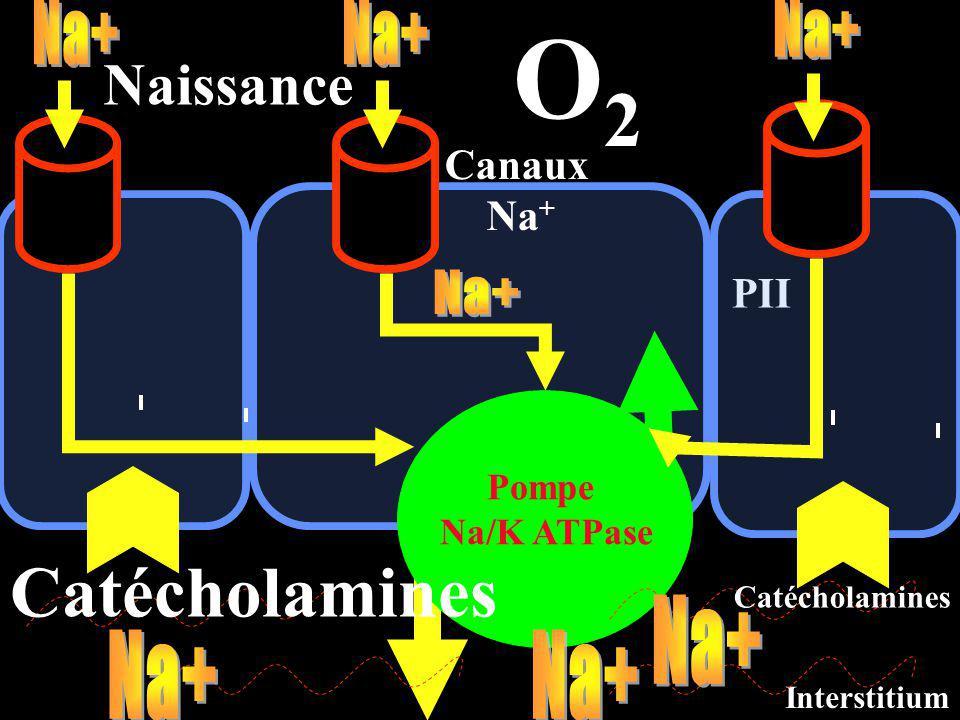 O2 Catécholamines Naissance Na+ Na+ Na+ Na+ Na+ Na+ Na+ Canaux Na+ PII