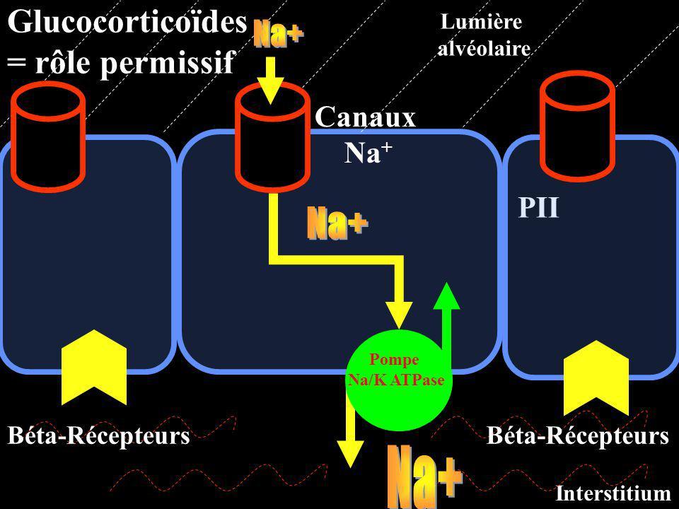Glucocorticoïdes = rôle permissif Na+ Na+ Na+ Canaux Na+ PII
