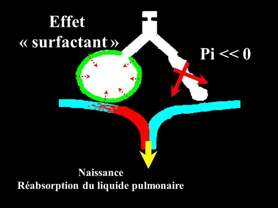 Réabsorption du liquide pulmonaire