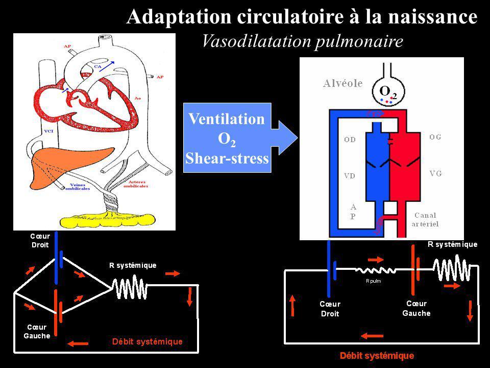 Adaptation circulatoire à la naissance
