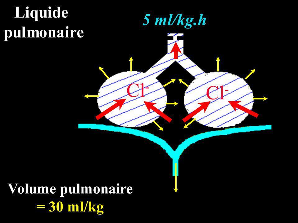 Liquide pulmonaire 5 ml/kg.h Cl- Cl- Volume pulmonaire = 30 ml/kg