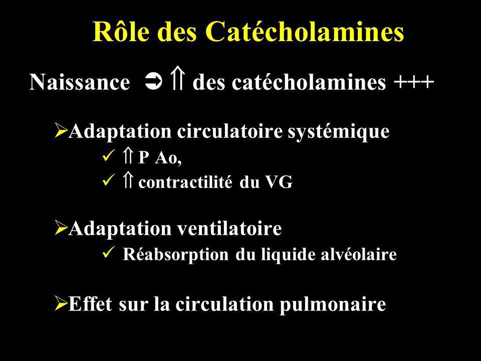 Rôle des Catécholamines