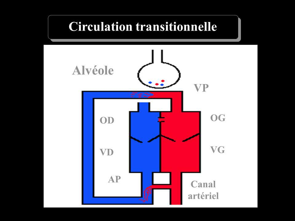 Circulation transitionnelle