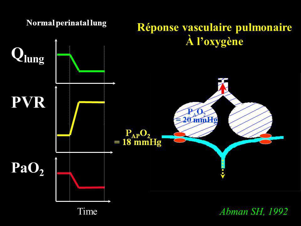 Réponse vasculaire pulmonaire
