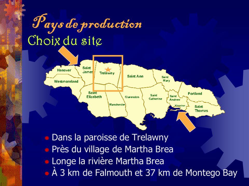 Pays de production Choix du site Dans la paroisse de Trelawny