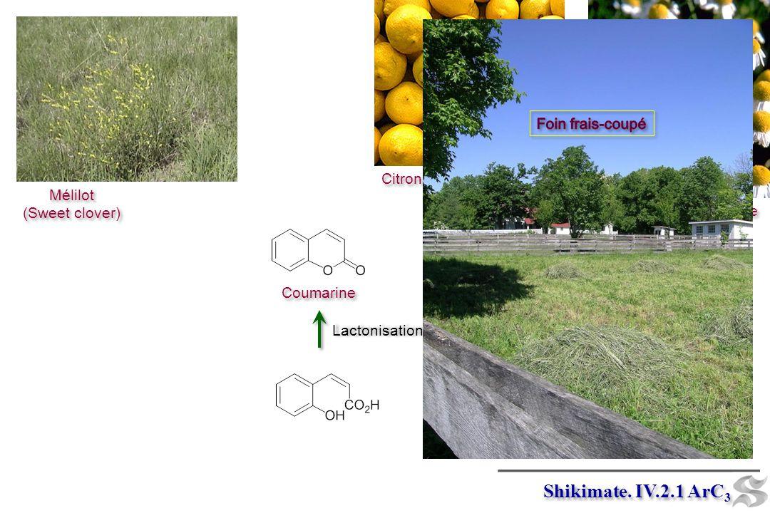 Shikimate. IV.2.1 ArC3 Foin frais-coupé Citrons Mélilot (Sweet clover)