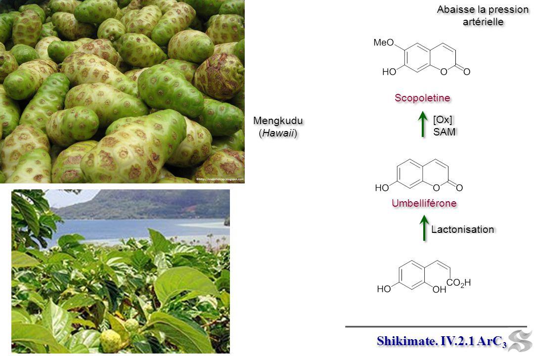 Shikimate. IV.2.1 ArC3 Abaisse la pression artérielle Scopoletine