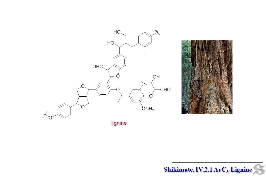 Shikimate. IV.2.1 ArC3-Lignine