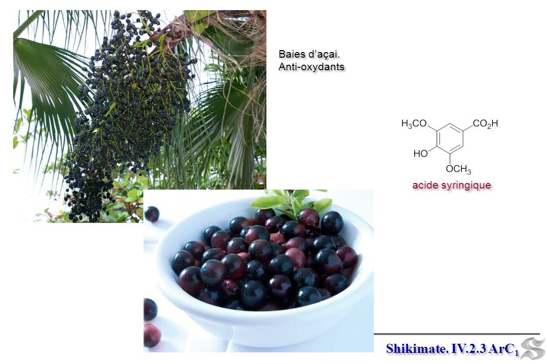 Baies d'açai. Anti-oxydants acide syringique Shikimate. IV.2.3 ArC1