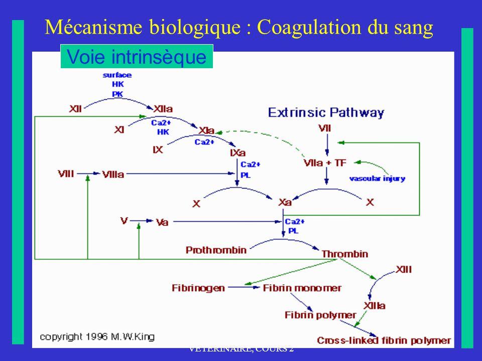 Mécanisme biologique : Coagulation du sang