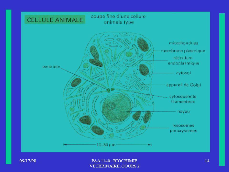 PAA 1140 - BIOCHIMIE VÉTÉRINAIRE, COURS 2