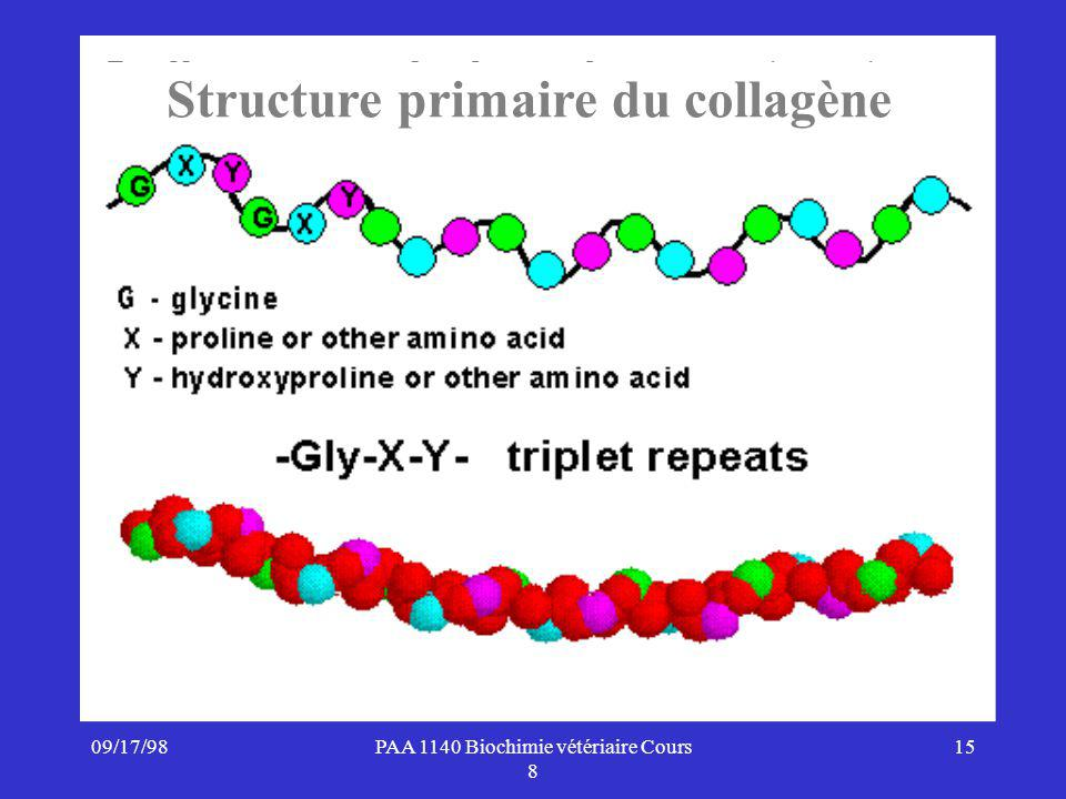 Structure primaire du collagène
