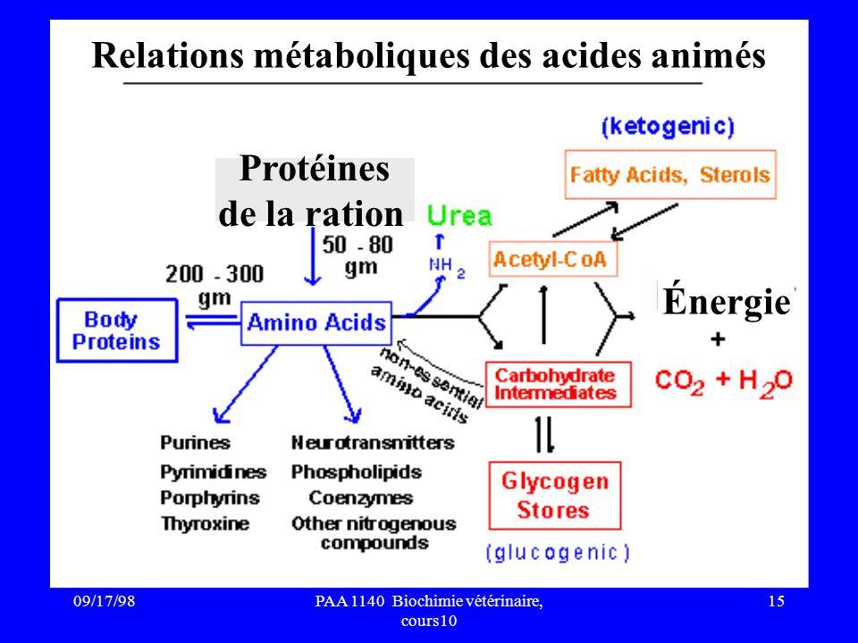 Relations métaboliques des acides animés