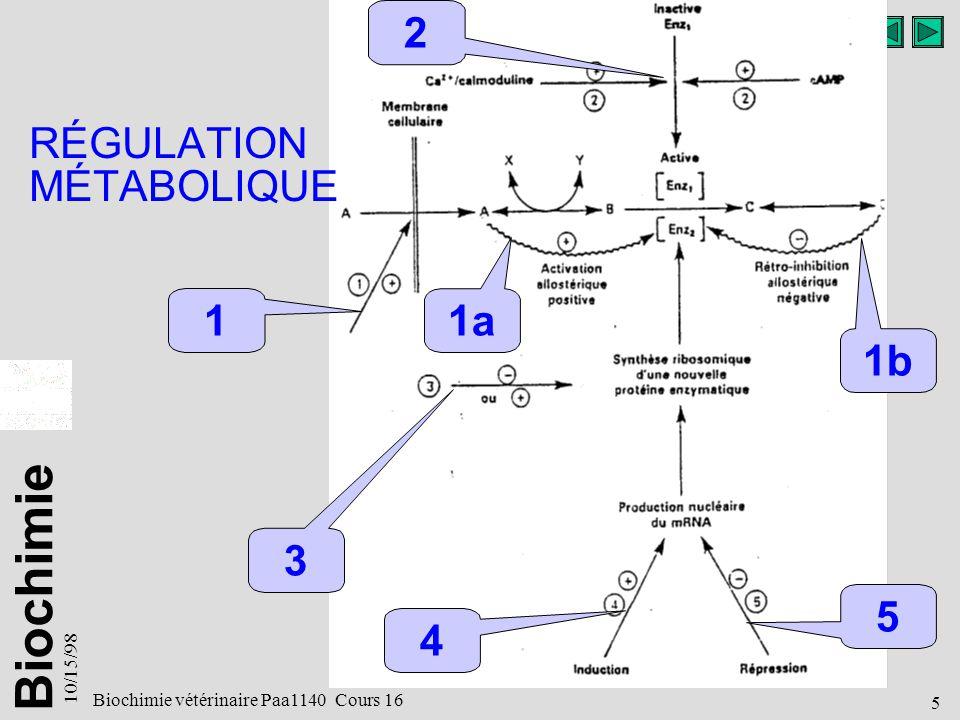 RÉGULATION MÉTABOLIQUE