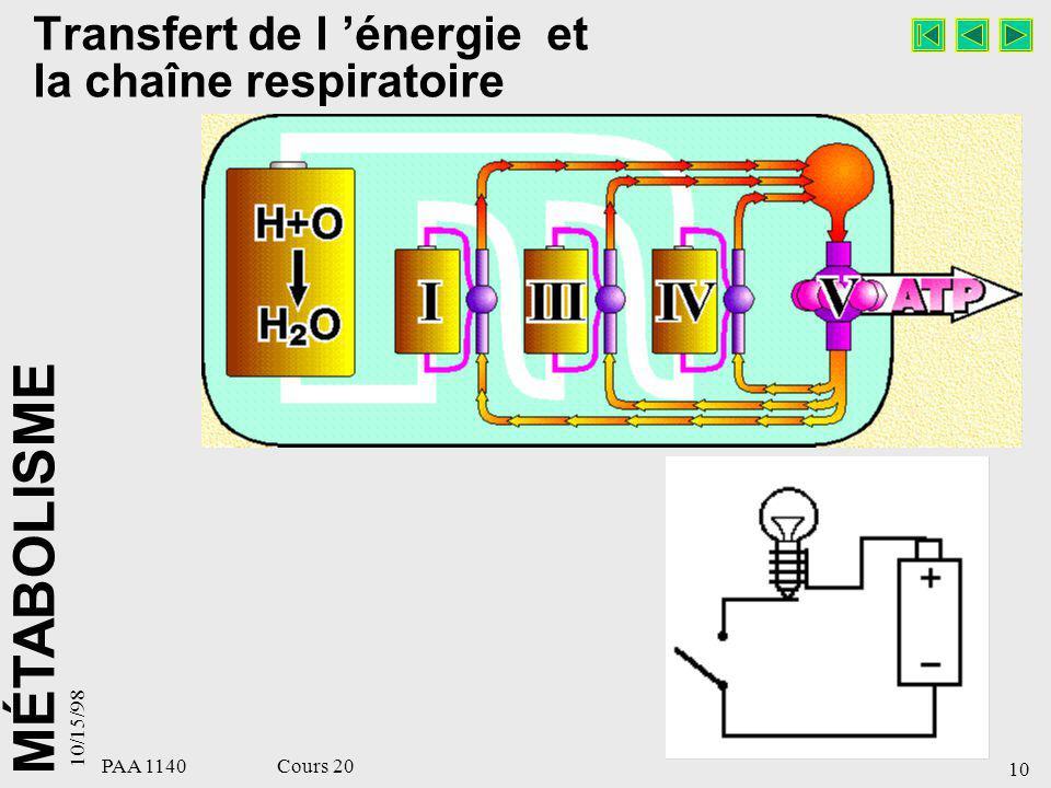 Transfert de l 'énergie et la chaîne respiratoire