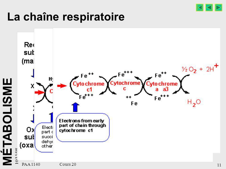 La chaîne respiratoire
