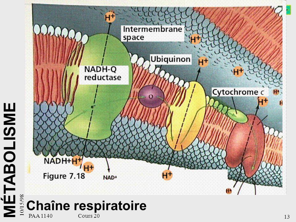 10/15/98 Chaîne respiratoire PAA 1140 Cours 20 13 13