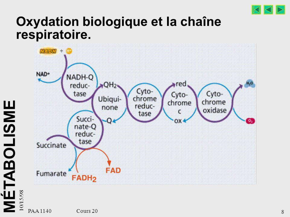 Oxydation biologique et la chaîne respiratoire.