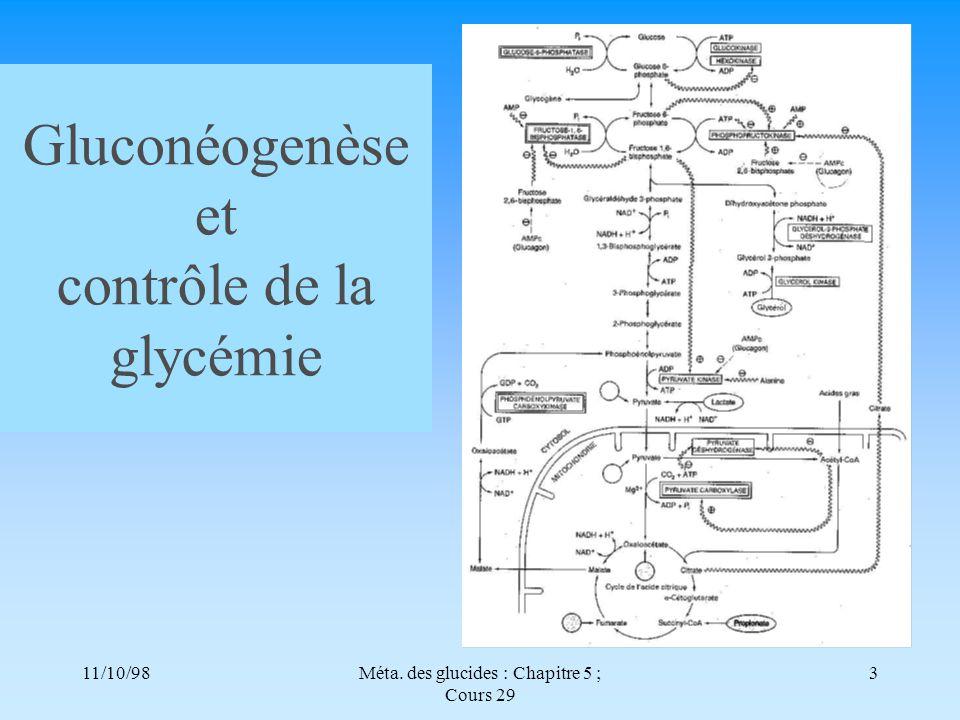 Gluconéogenèse et contrôle de la glycémie