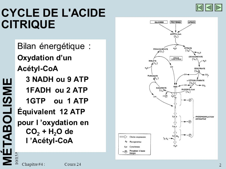 CYCLE DE L ACIDE CITRIQUE