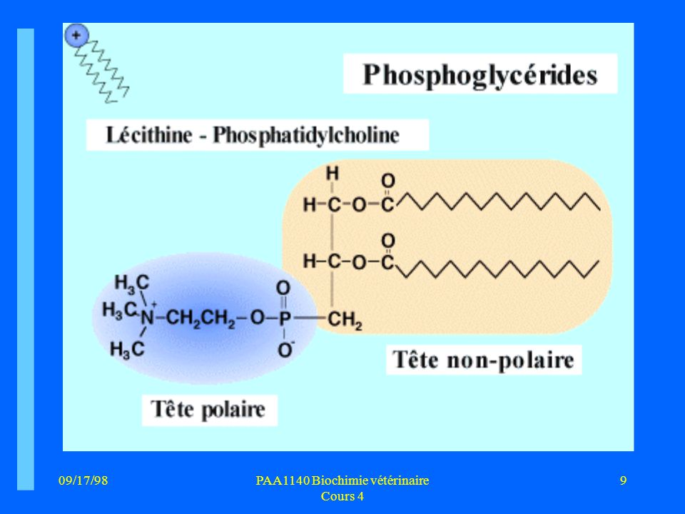 PAA1140 Biochimie vétérinaire Cours 4