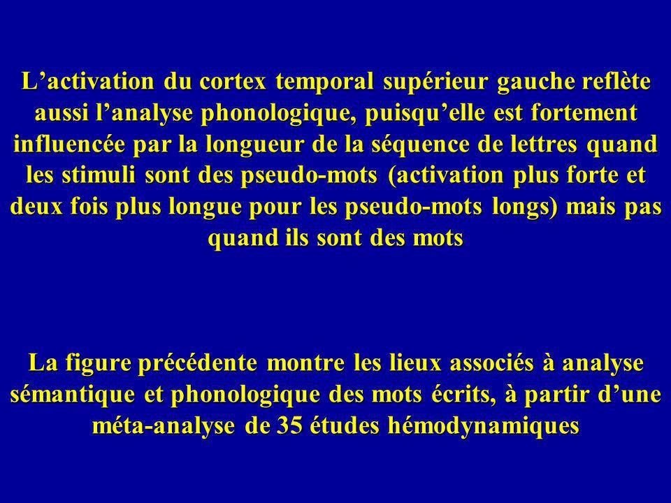 L'activation du cortex temporal supérieur gauche reflète aussi l'analyse phonologique, puisqu'elle est fortement influencée par la longueur de la séquence de lettres quand les stimuli sont des pseudo-mots (activation plus forte et deux fois plus longue pour les pseudo-mots longs) mais pas quand ils sont des mots La figure précédente montre les lieux associés à analyse sémantique et phonologique des mots écrits, à partir d'une méta-analyse de 35 études hémodynamiques
