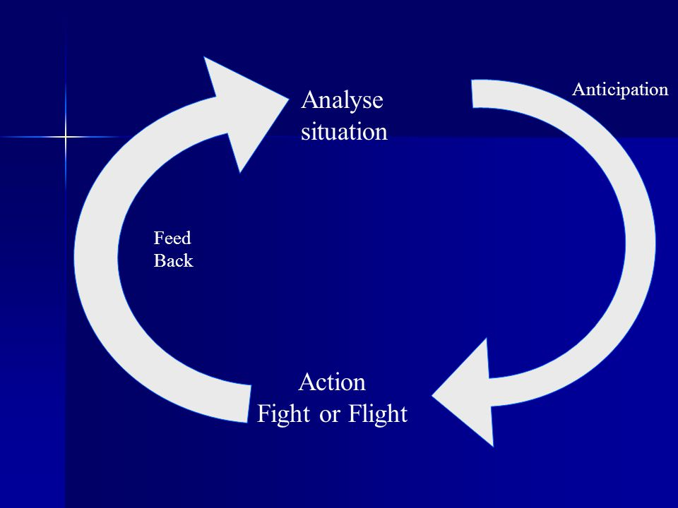 Anticipation Analyse situation Feed Back Action Fight or Flight