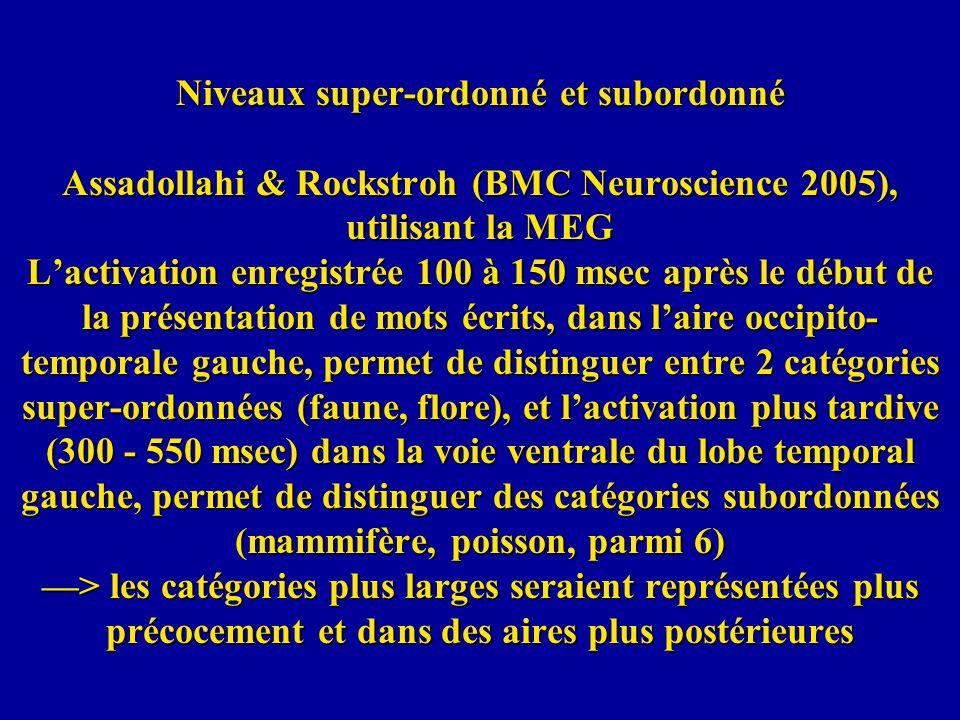 Niveaux super-ordonné et subordonné Assadollahi & Rockstroh (BMC Neuroscience 2005), utilisant la MEG L'activation enregistrée 100 à 150 msec après le début de la présentation de mots écrits, dans l'aire occipito-temporale gauche, permet de distinguer entre 2 catégories super-ordonnées (faune, flore), et l'activation plus tardive (300 - 550 msec) dans la voie ventrale du lobe temporal gauche, permet de distinguer des catégories subordonnées (mammifère, poisson, parmi 6) —> les catégories plus larges seraient représentées plus précocement et dans des aires plus postérieures