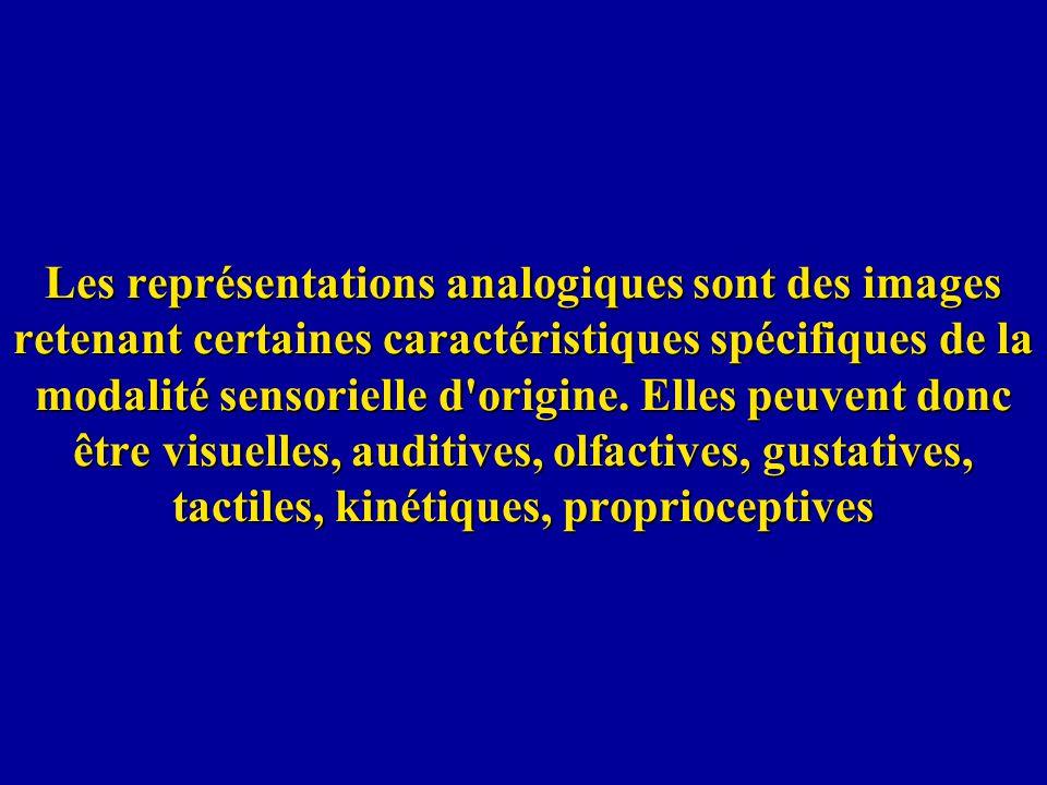 Les représentations analogiques sont des images retenant certaines caractéristiques spécifiques de la modalité sensorielle d origine.