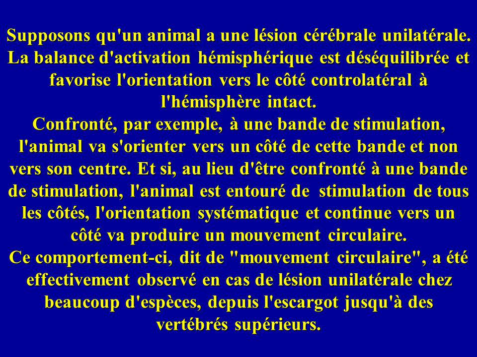 Supposons qu un animal a une lésion cérébrale unilatérale