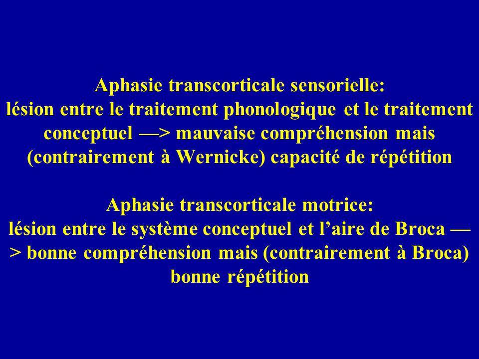 Aphasie transcorticale sensorielle: lésion entre le traitement phonologique et le traitement conceptuel —> mauvaise compréhension mais (contrairement à Wernicke) capacité de répétition Aphasie transcorticale motrice: lésion entre le système conceptuel et l'aire de Broca —> bonne compréhension mais (contrairement à Broca) bonne répétition