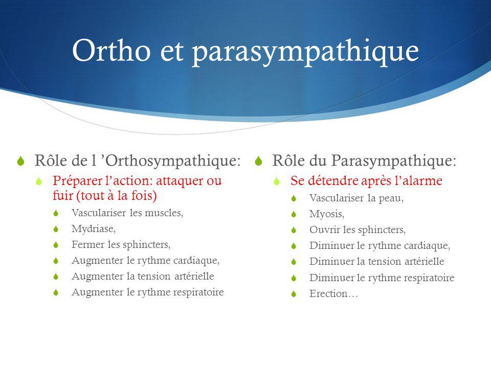 Ortho et parasympathique