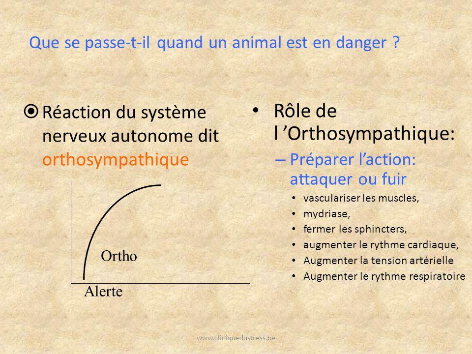 Rôle de l 'Orthosympathique: