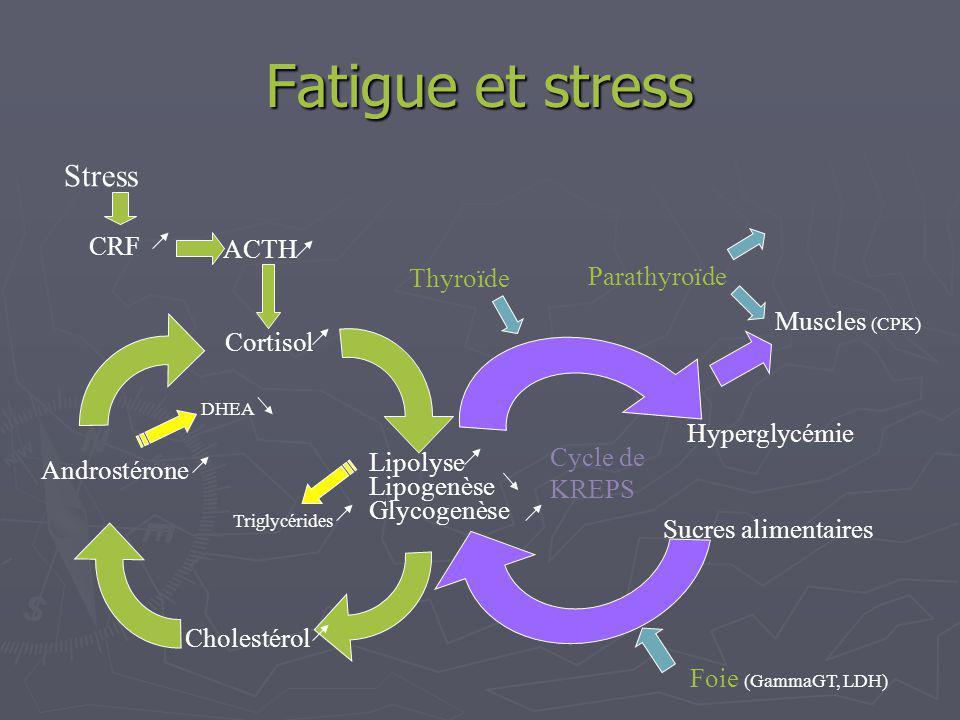 Fatigue et stress Stress CRF ACTH Thyroïde Parathyroïde Muscles (CPK)