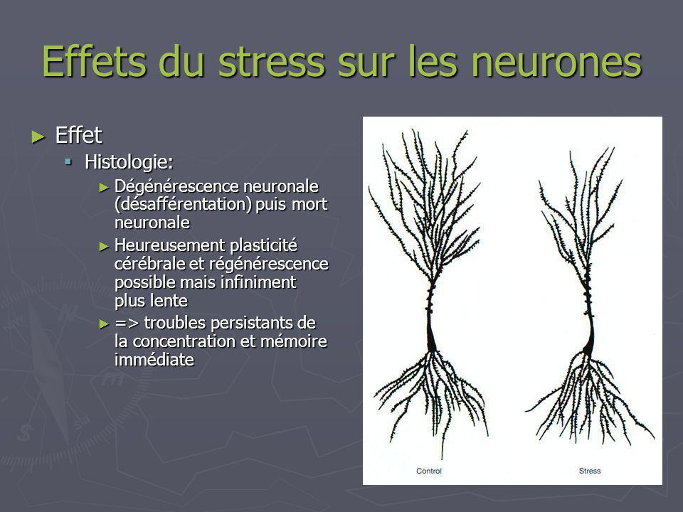 Effets du stress sur les neurones