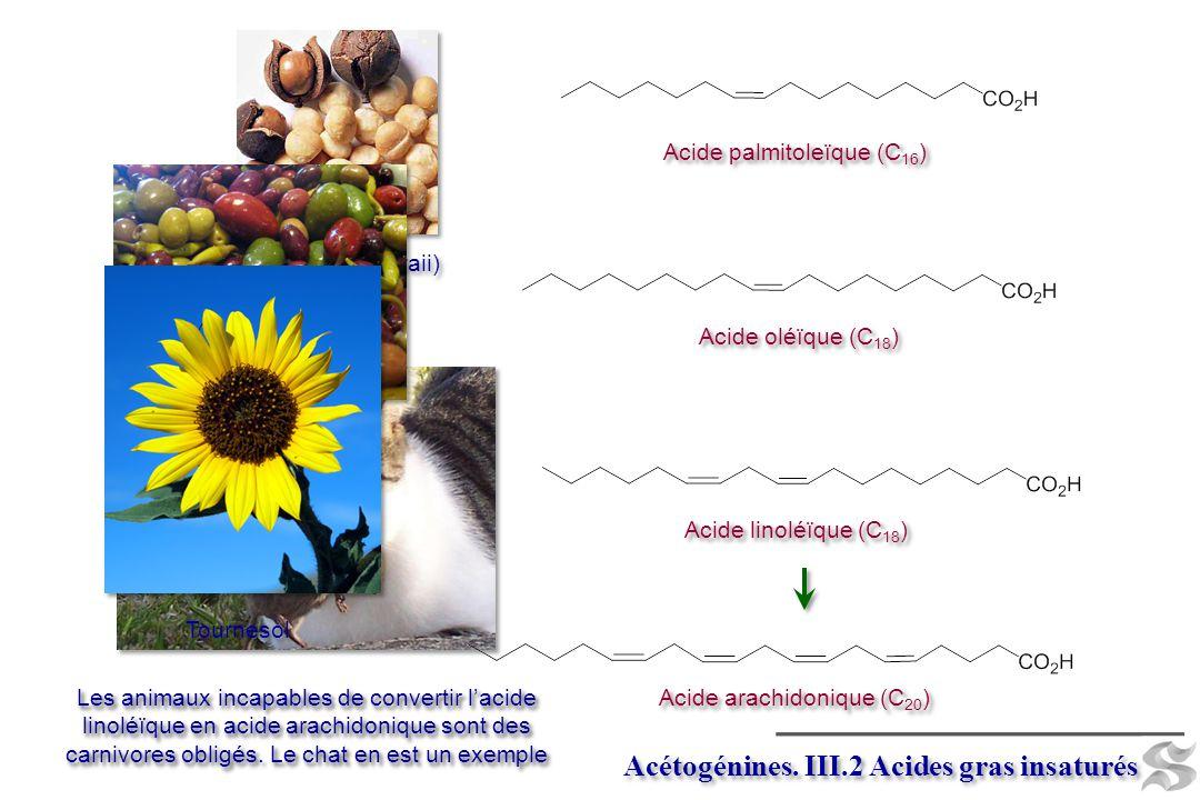 Acétogénines. III.2 Acides gras insaturés